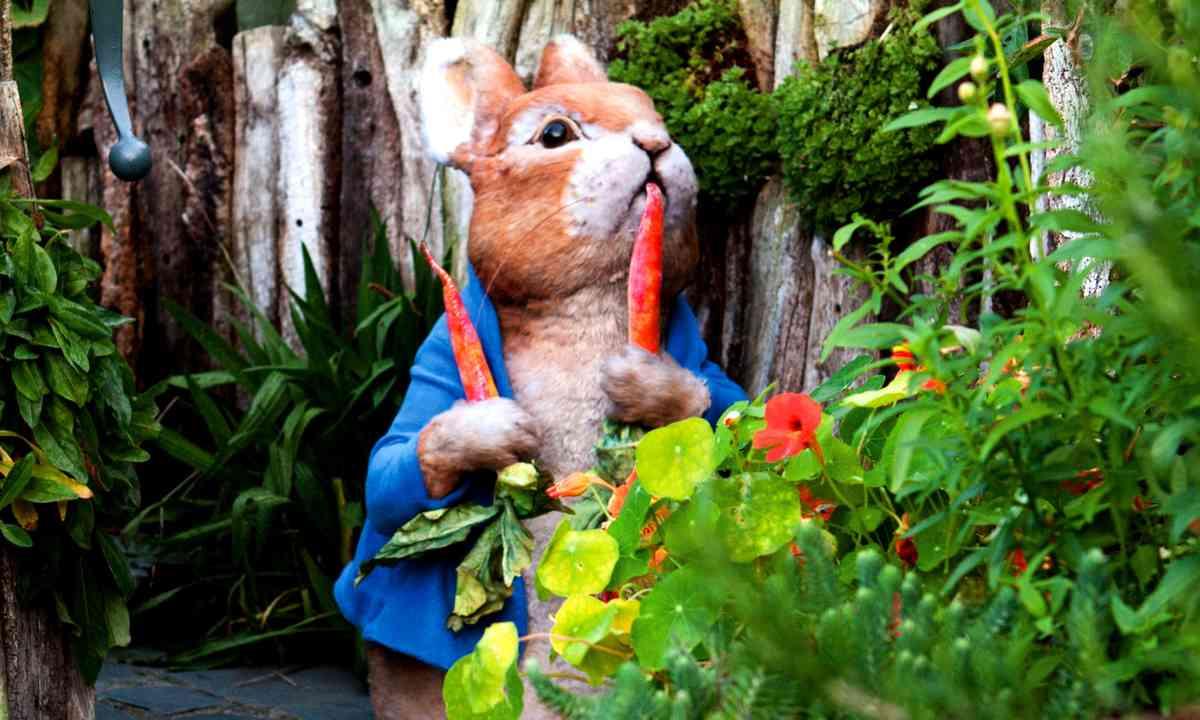 Peter Rabbit in the carrots (hop-skip-jump.com)