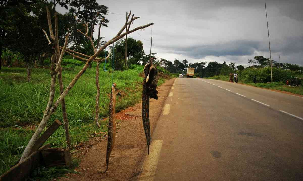 Bushmeat on the road to Yaounde (Charlie Walker)