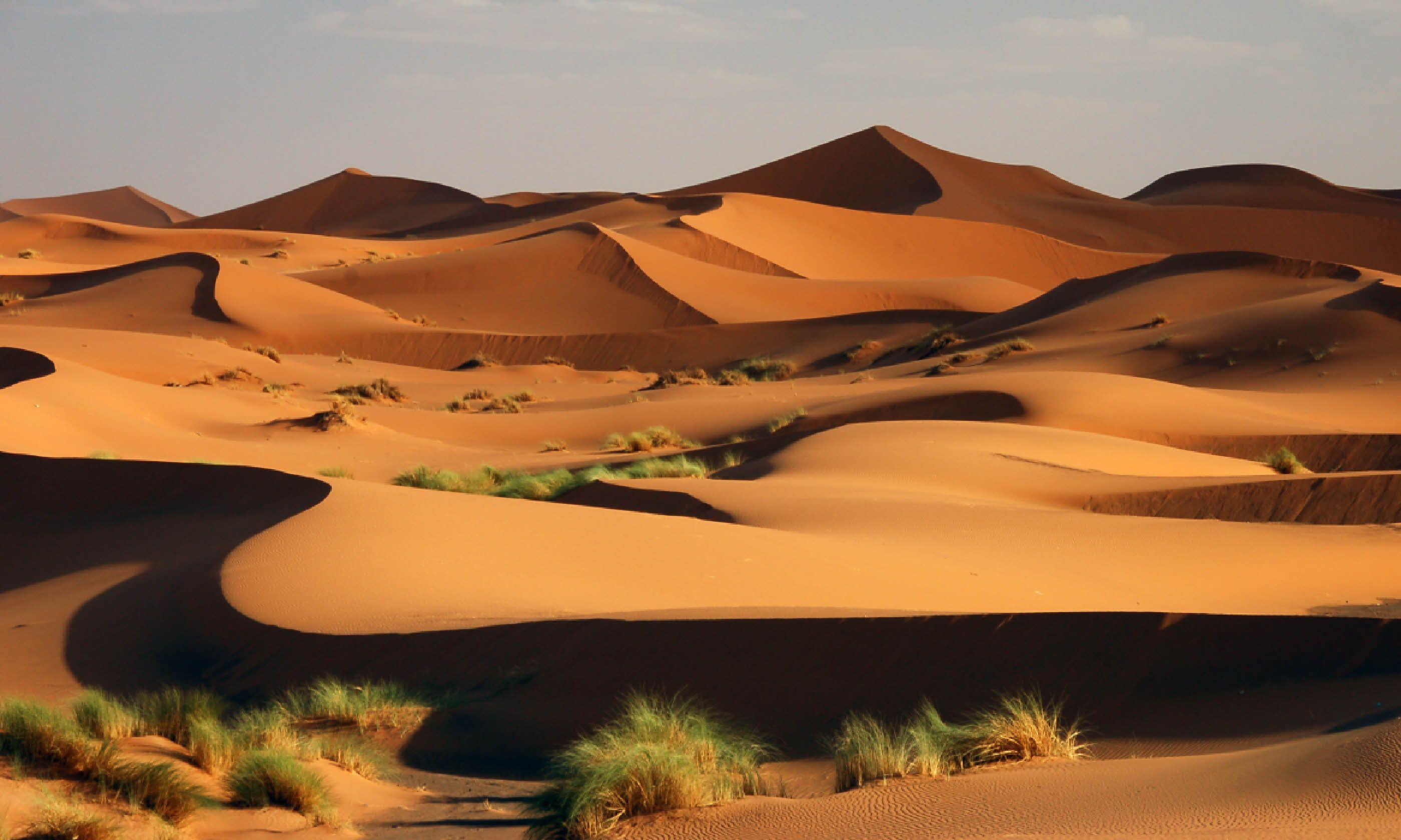 Sahara Desert, Morocco (Shutterstock)