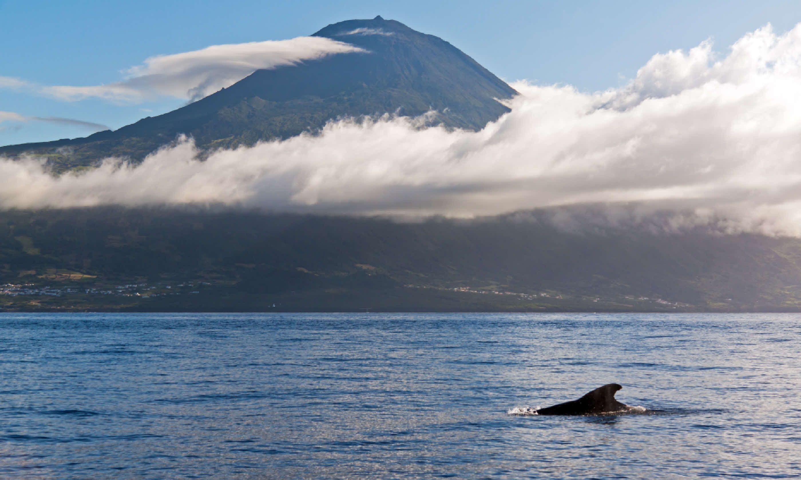 Whale off Pico island (Shutterstock)