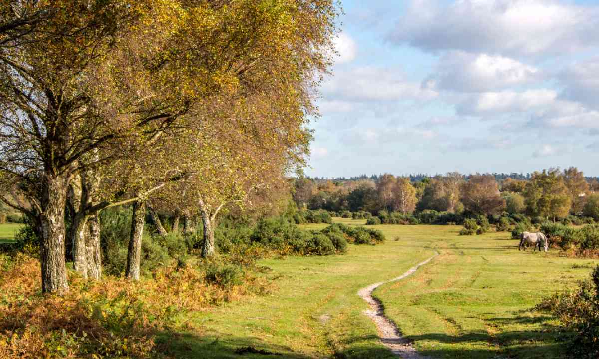 New Forest (Shutterstock)