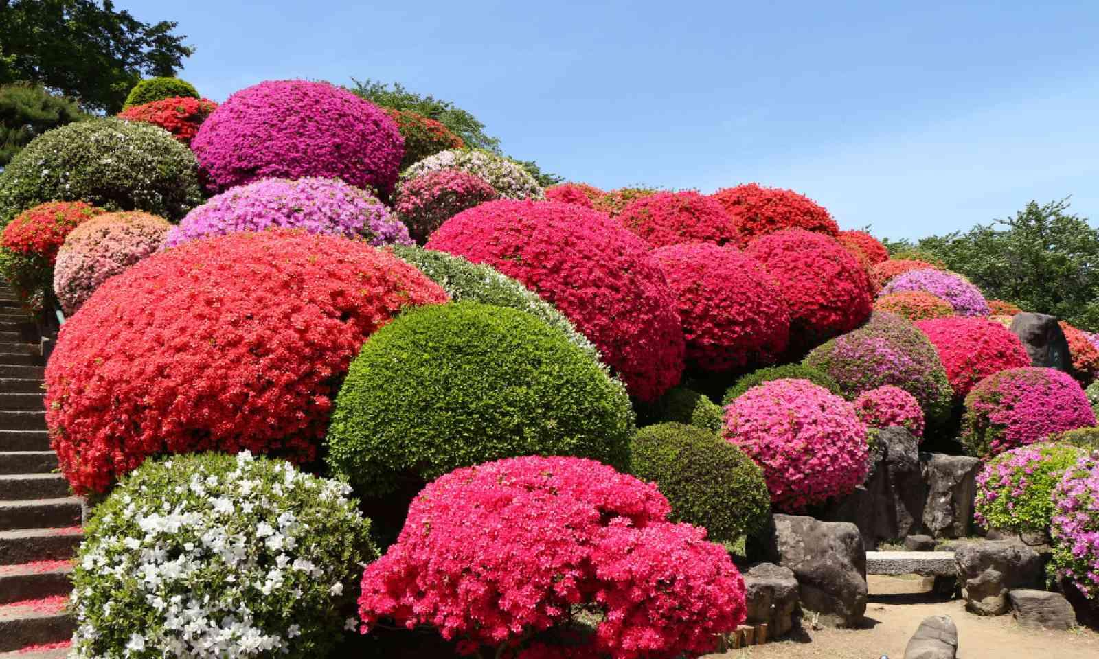 Exbury Gardens (Shutterstock)