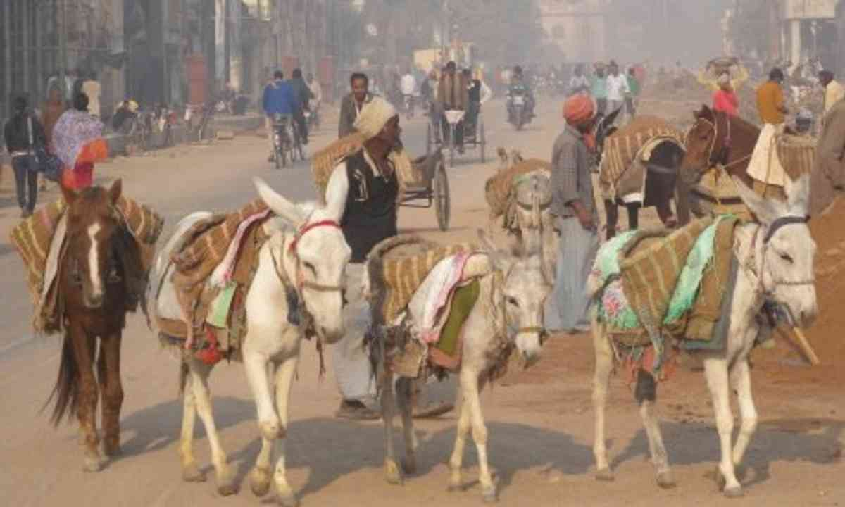 The roads of India (Charlie Walker)
