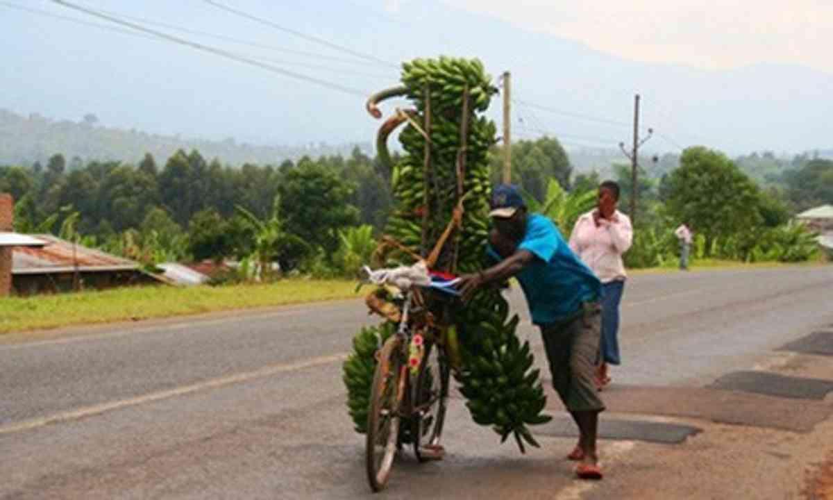 Banana bike, Uganda (Charlie Walker)