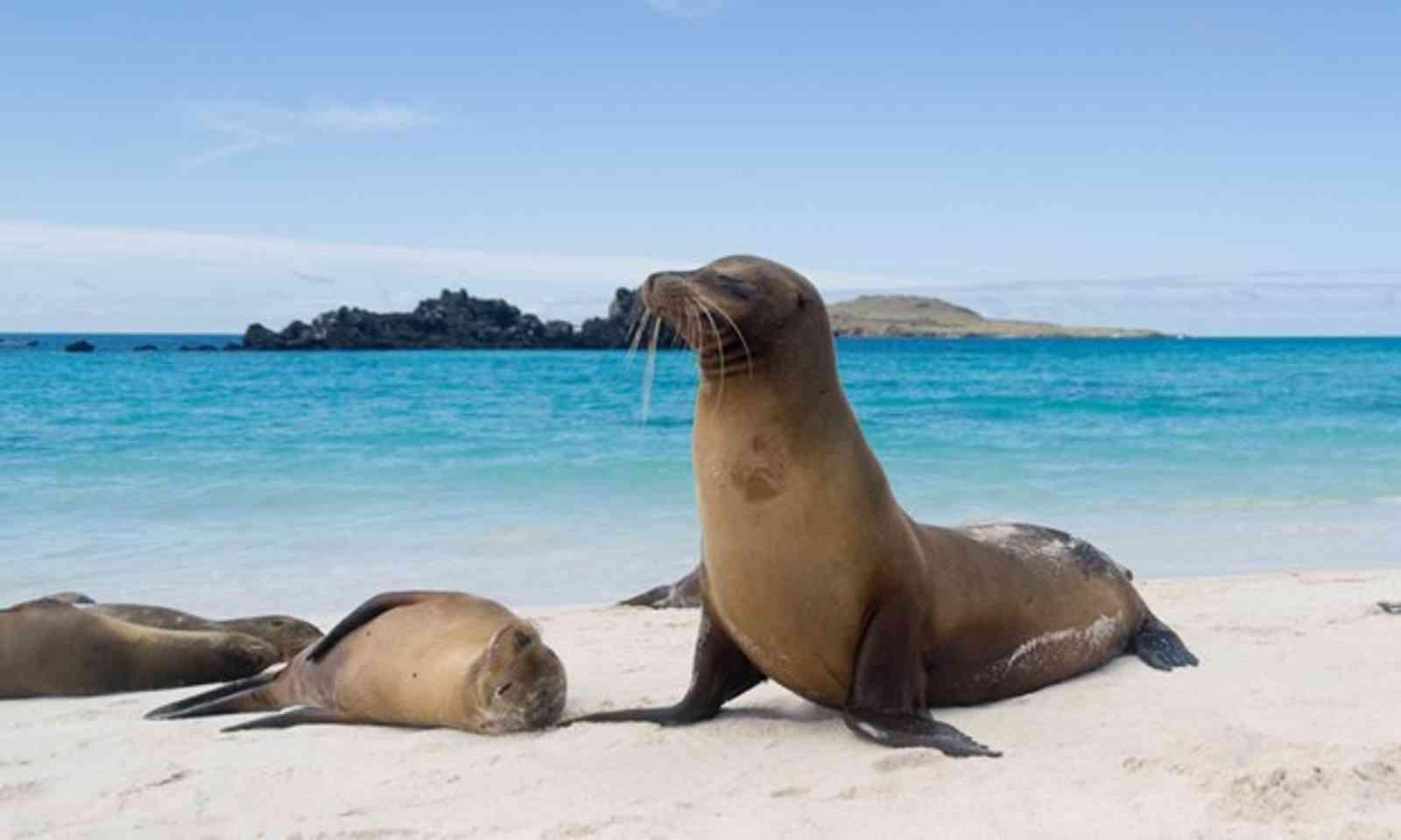 Galapagos Sea Lion (Shutterstock.com)