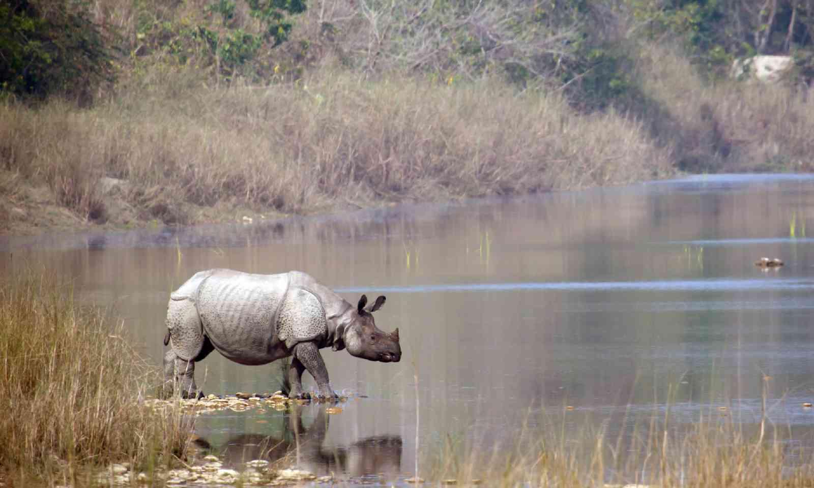 Rhino in Bardia, Nepal (Shutterstock)