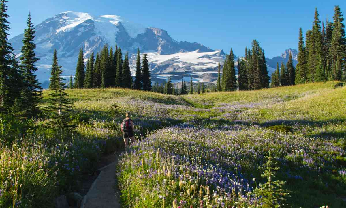 Mount Rainier National Park (Shutterstock)
