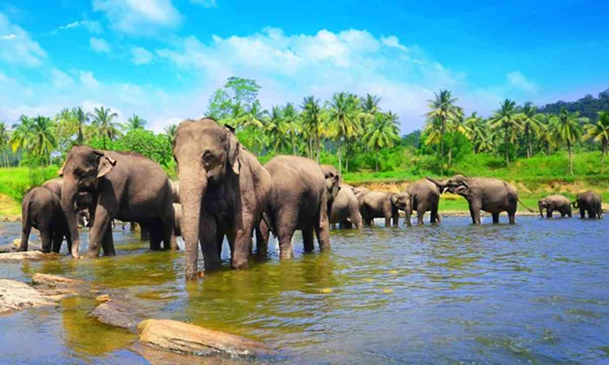 Elephants, Sri Lanka (Shutterstock.com)