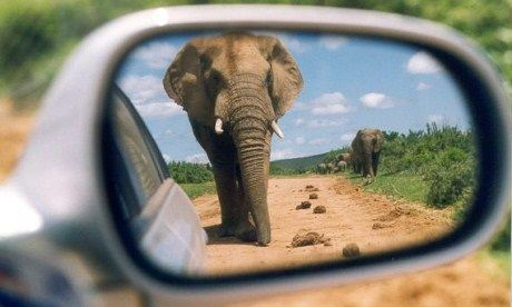 Elephant in the side mirror