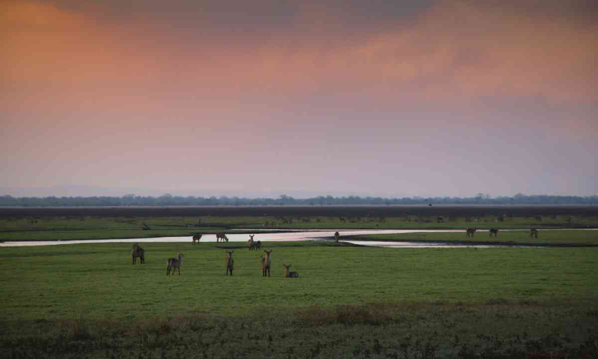 Gorongosa (Dreamstime)