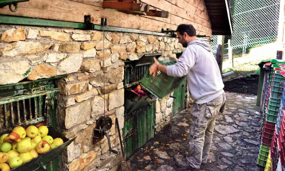 Feeding apples to the bears at Arcturos sanctuary (Sarah Baxter)