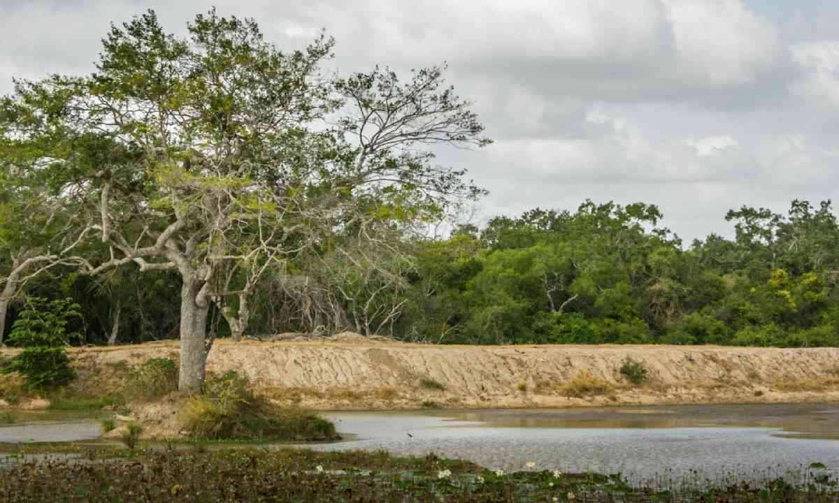 Wilpattu National Park (Dreamstime)
