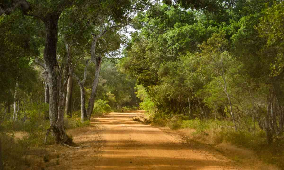 Wilpattu National Park (Dreamstime)