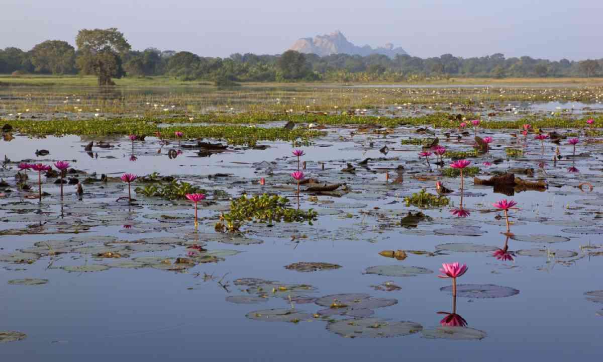 Water lily lake near Paramakanda Temple (Shutterstock)
