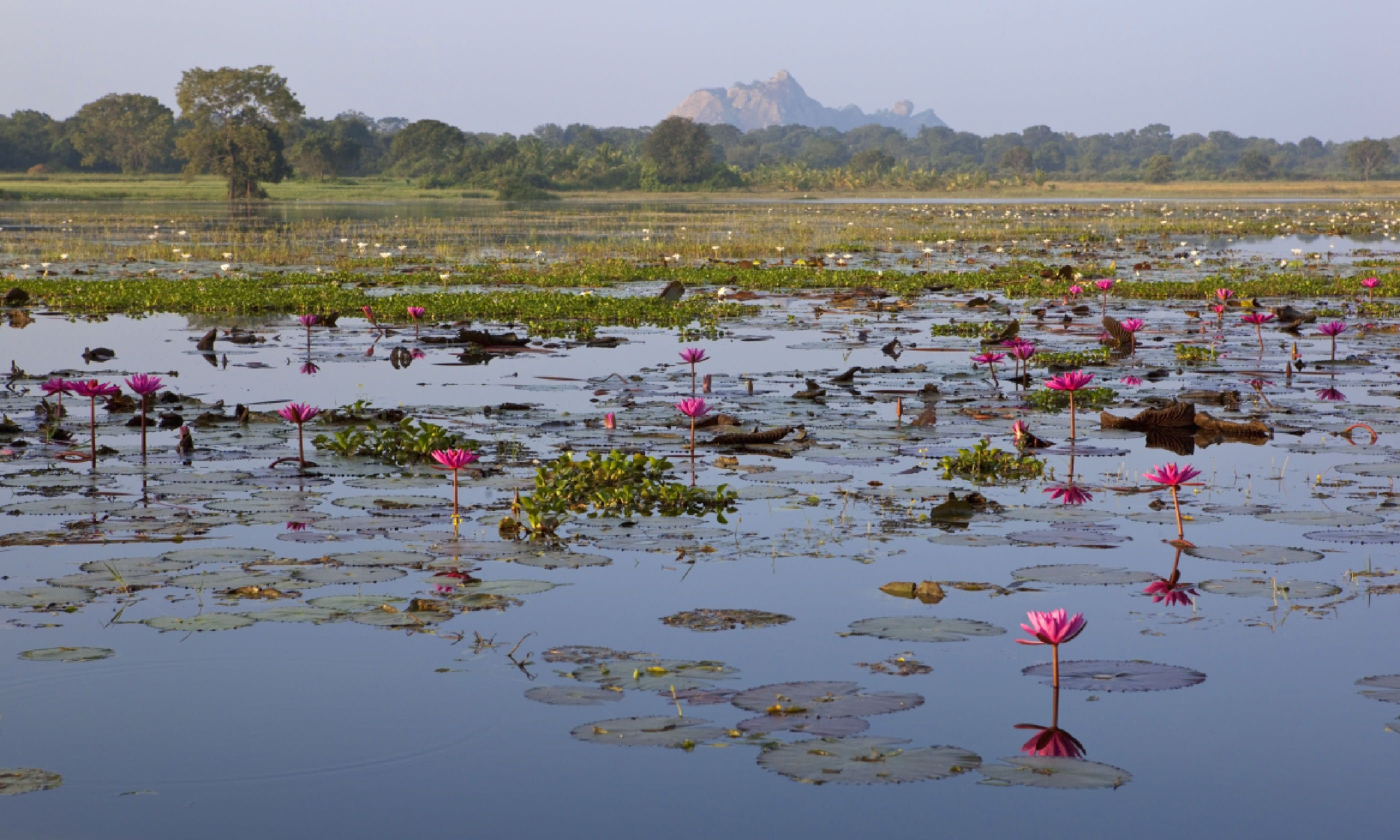 Water lily lake near Paramakanda Temple (Shutterstock)