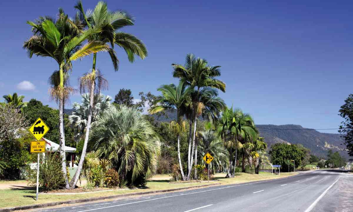 The long drive to Eungella National Park (William Gray)