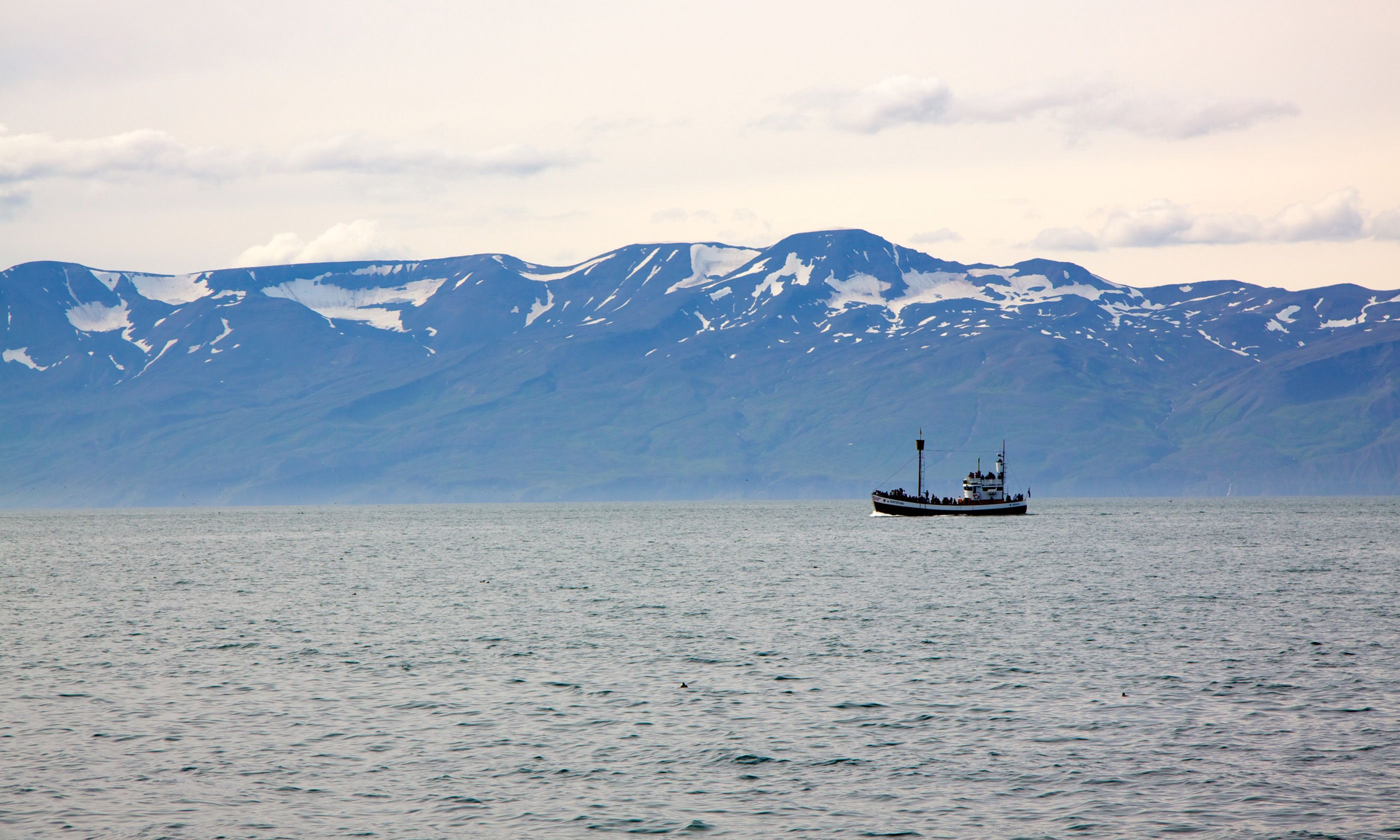 Whale watching boat in Shaky Bay, Iceland (Peter Moore)