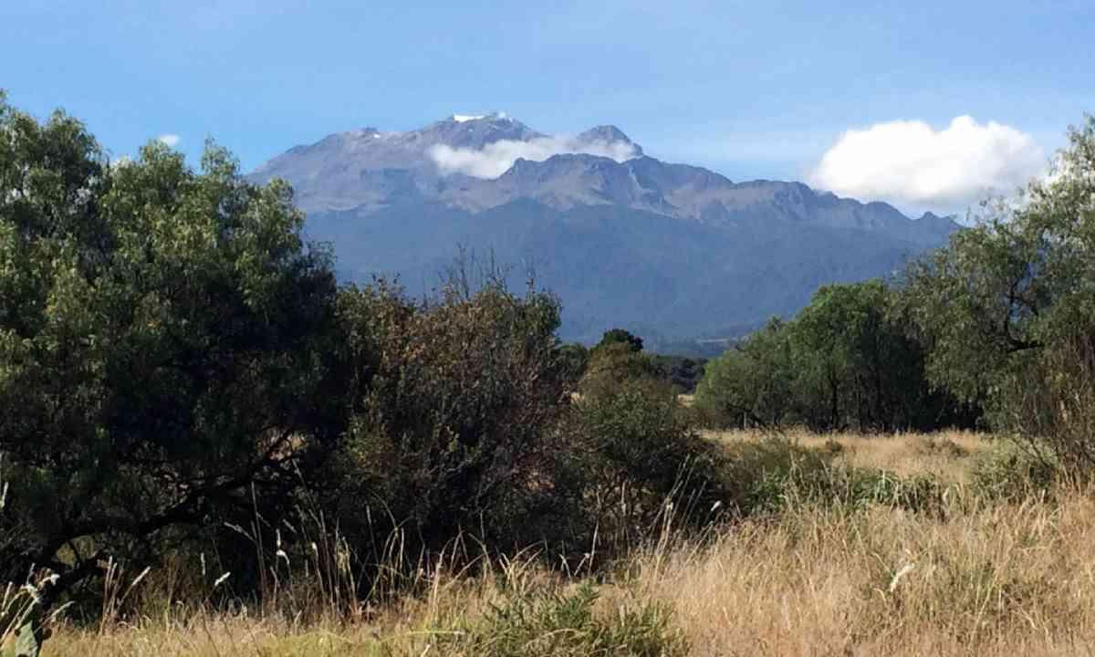 Popocatépetl (Hazel Plush)