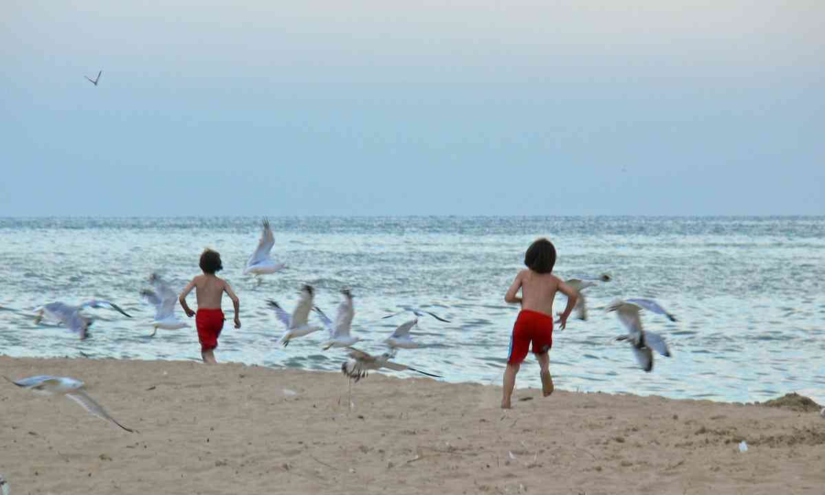 Chasing seagulls (Shutterstock.com)