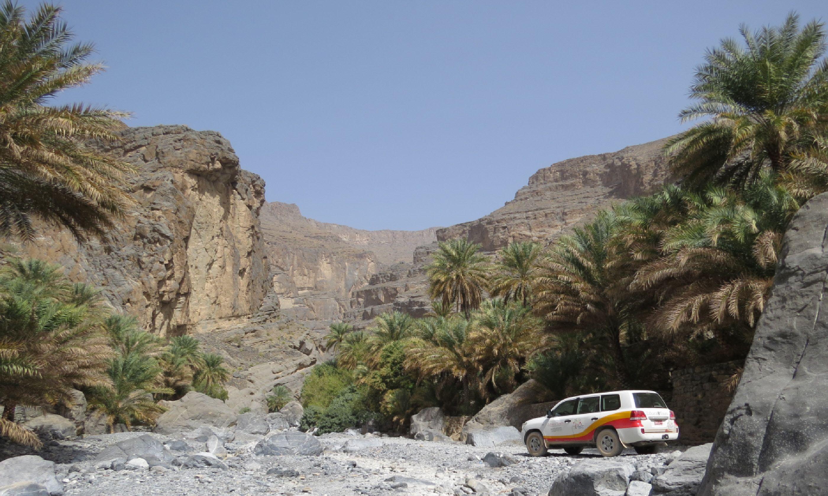 Wadi Nakhr (Hazel Plush)