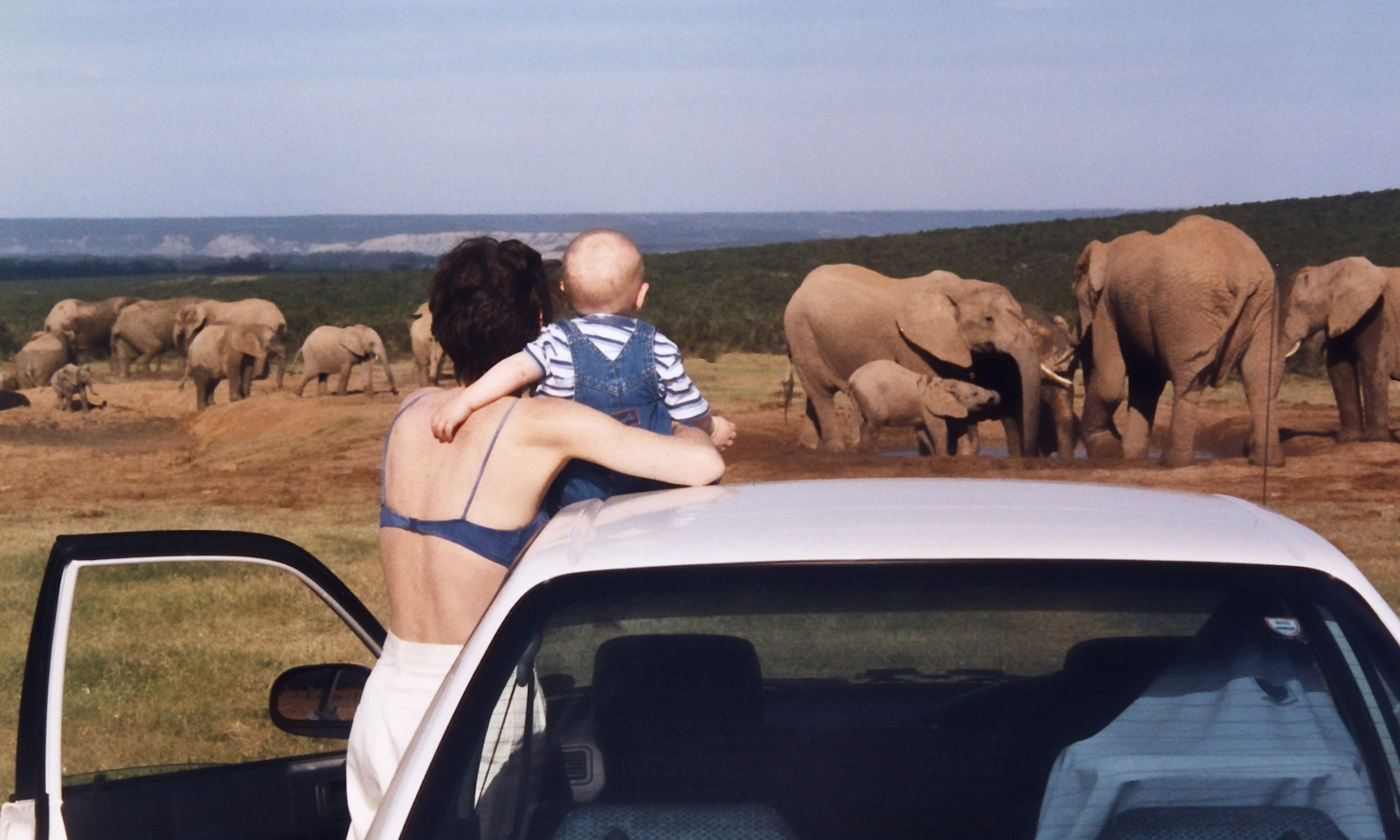 Babe watching elephants (Melanie Gow)