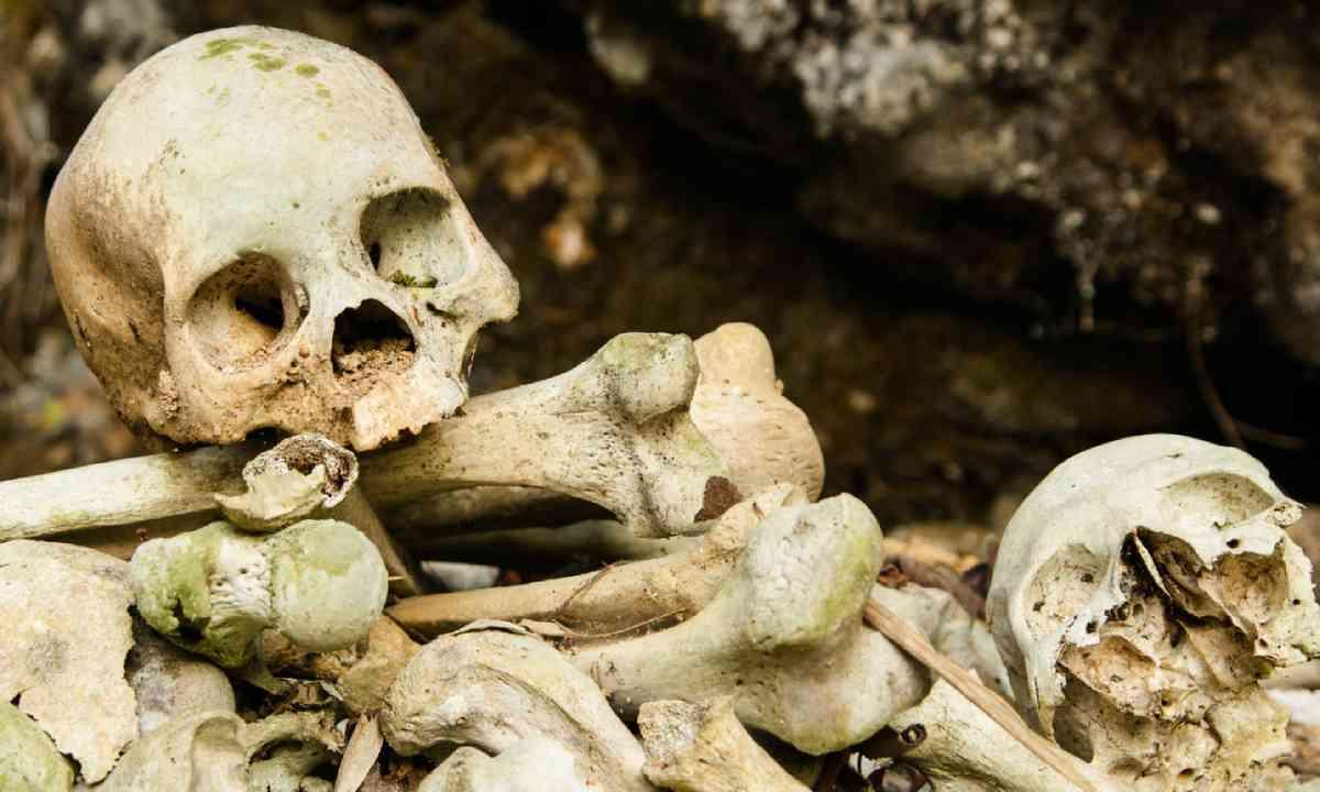 Skull and bones in Torajia (Dreamstime)