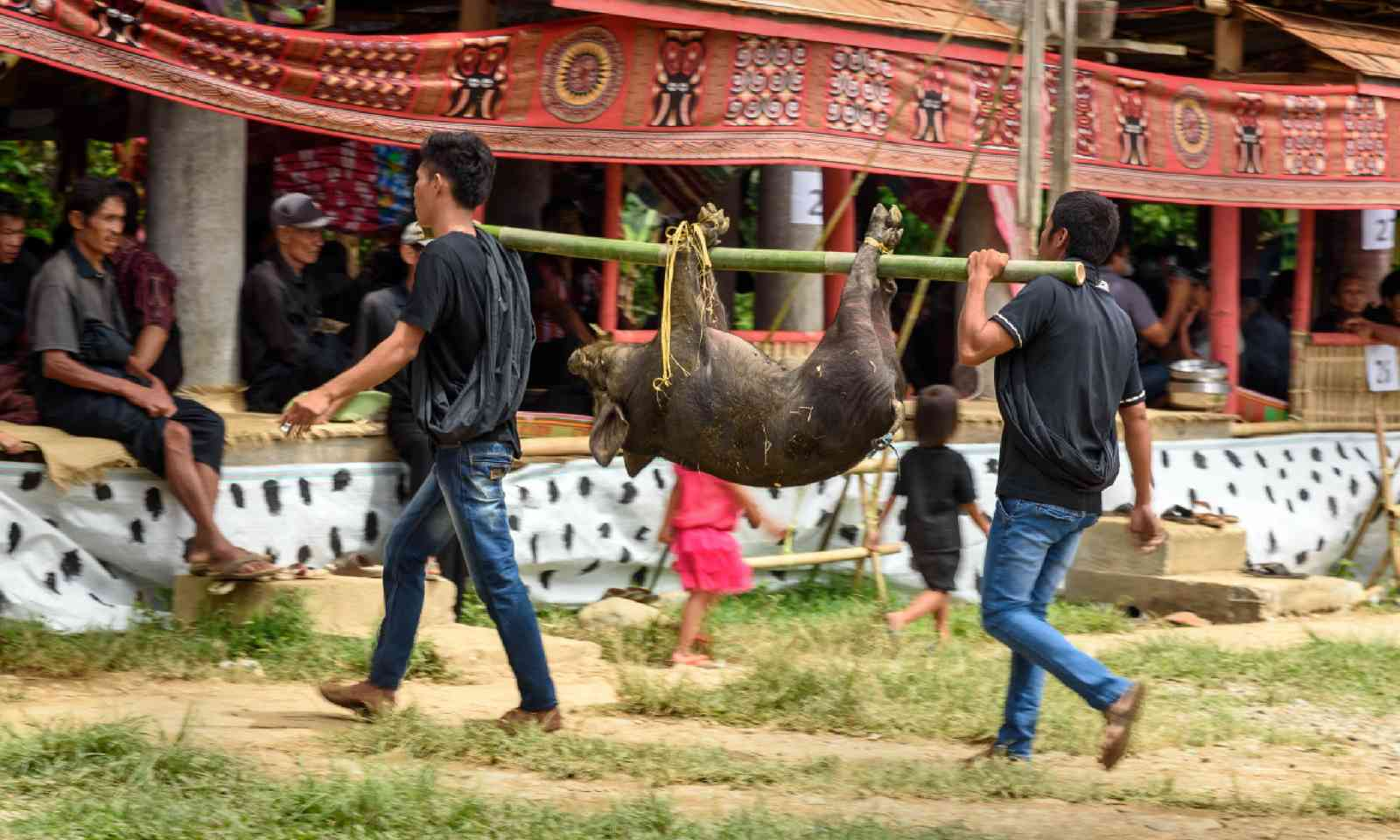 Animal sacrafice at funeral in Sulawesi (Shutterstock)