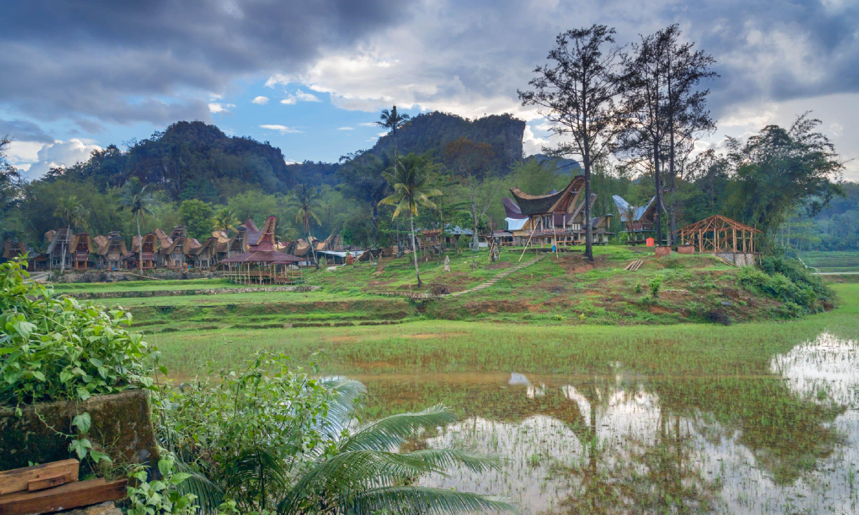 Tongkonan traditional village Kete Kesu (Shutterstock)