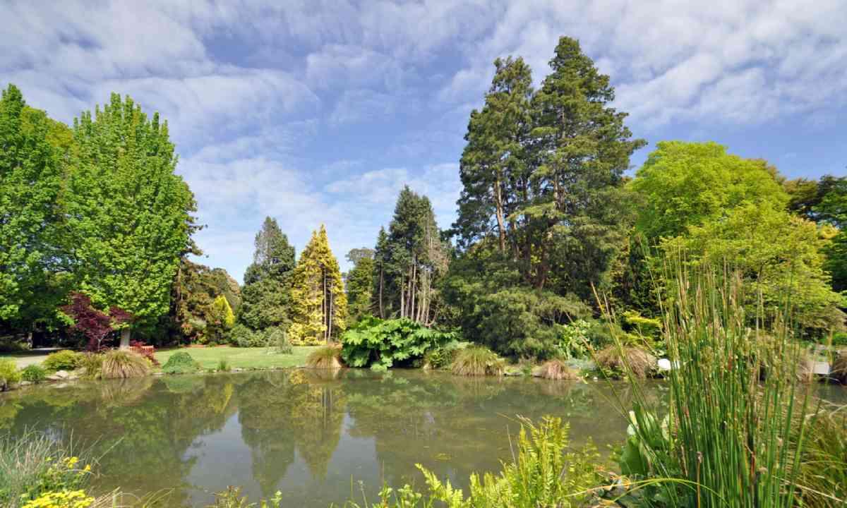 Botanical Gardens, Christchurch, New Zealand (Shutterstock)