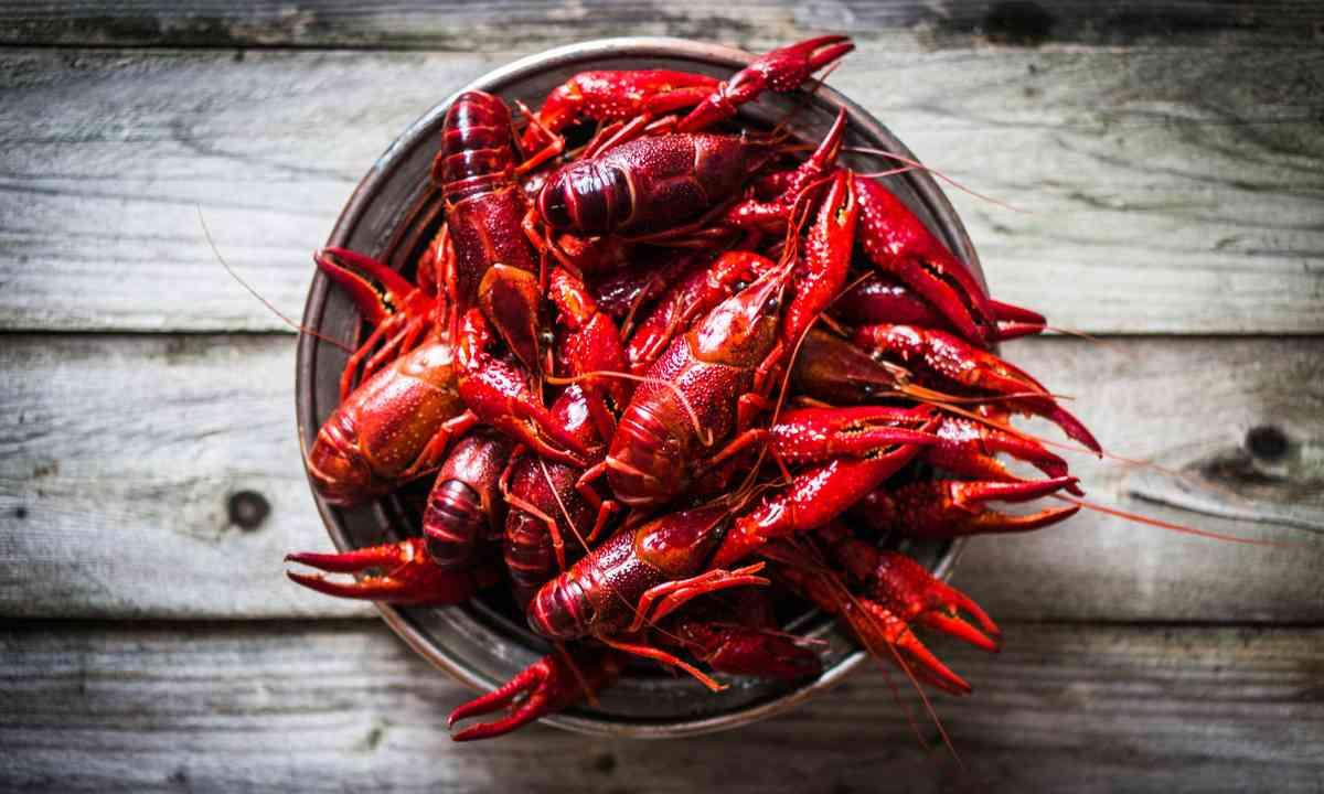 Swedish crayfish (Shutterstock.com)