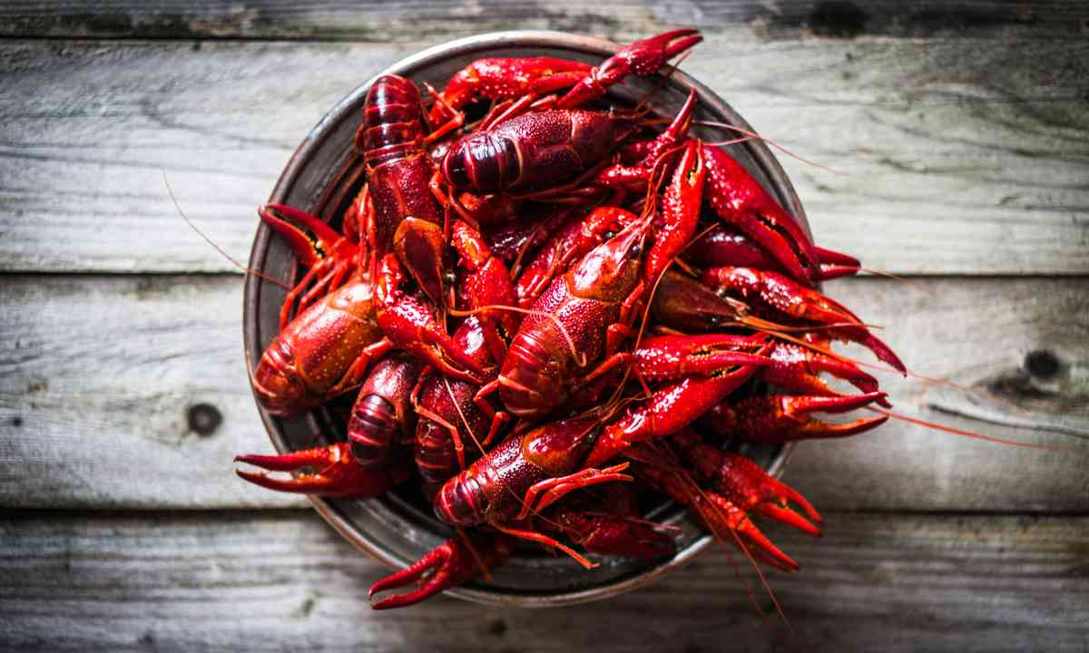 Swedish crayfish (Shutterstock.com)