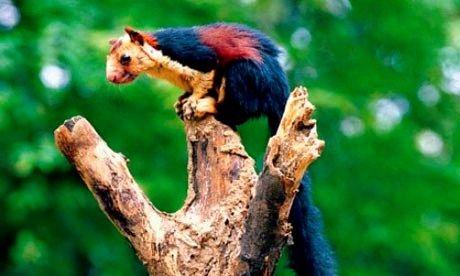 Indian Wildlife Secrets