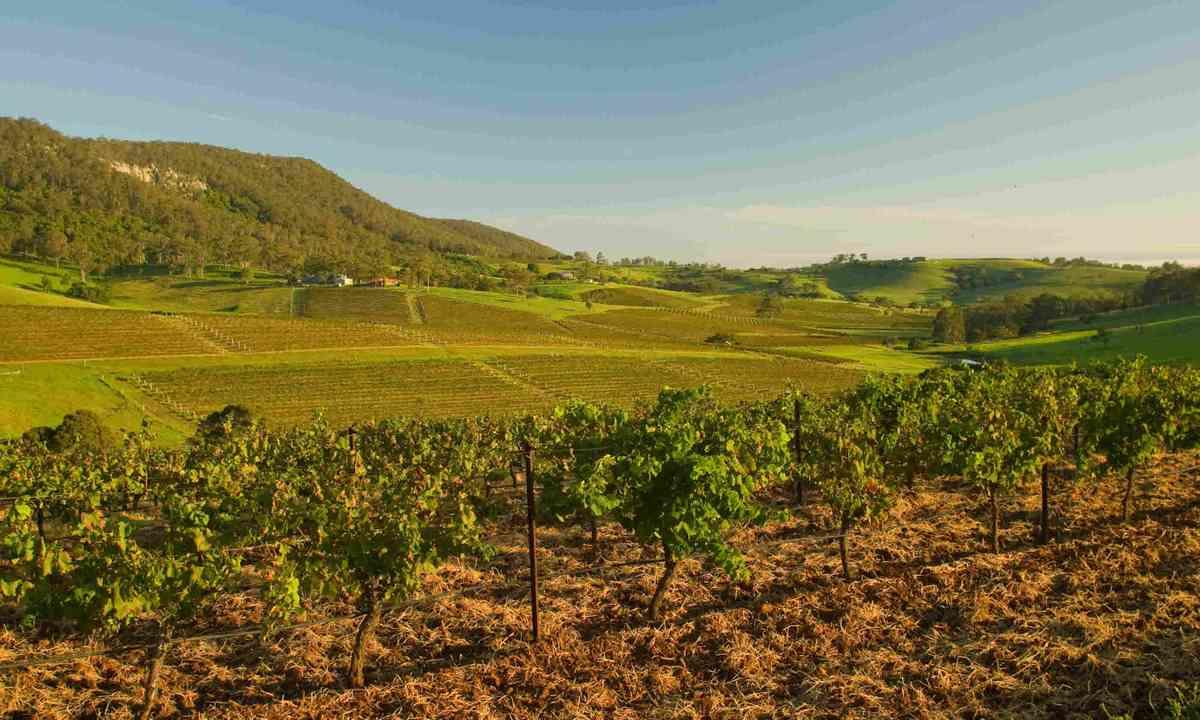 Vineyards in Hunter Valley, Australia (Shutterstock)