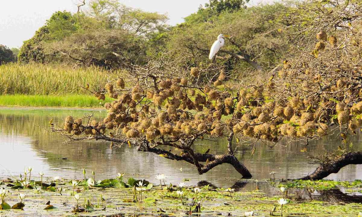 Wildlife rich lagoon on Orango Island (Nick Boulos)