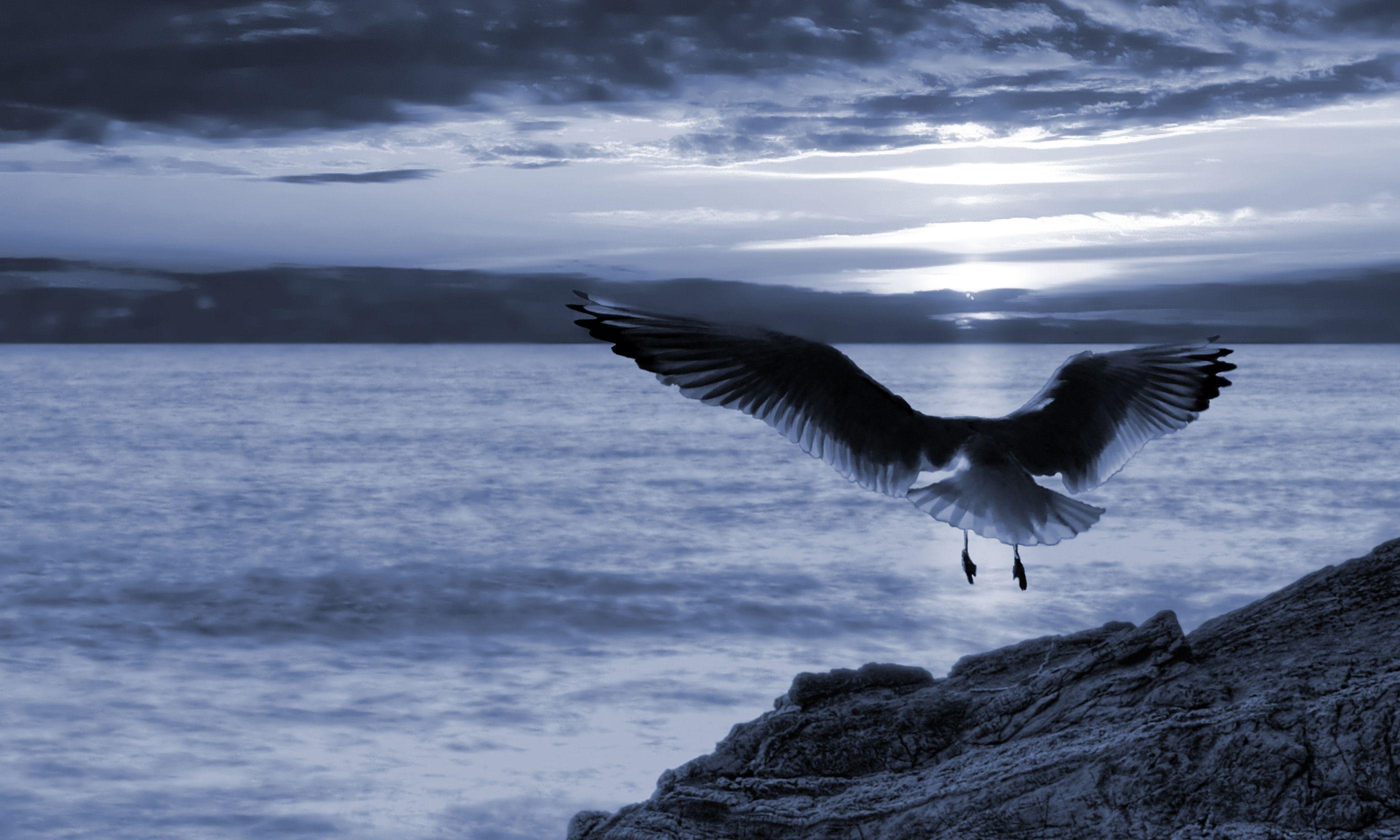A bird flying at night (Shutterstock.com)