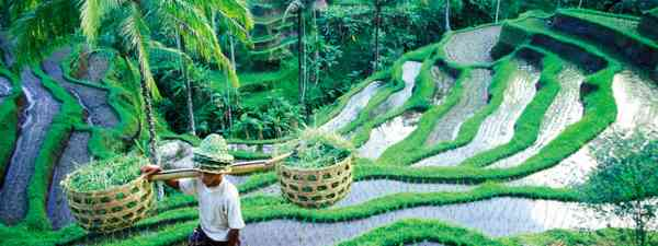 Rice terraces around Tegallalang (Dreamstime)
