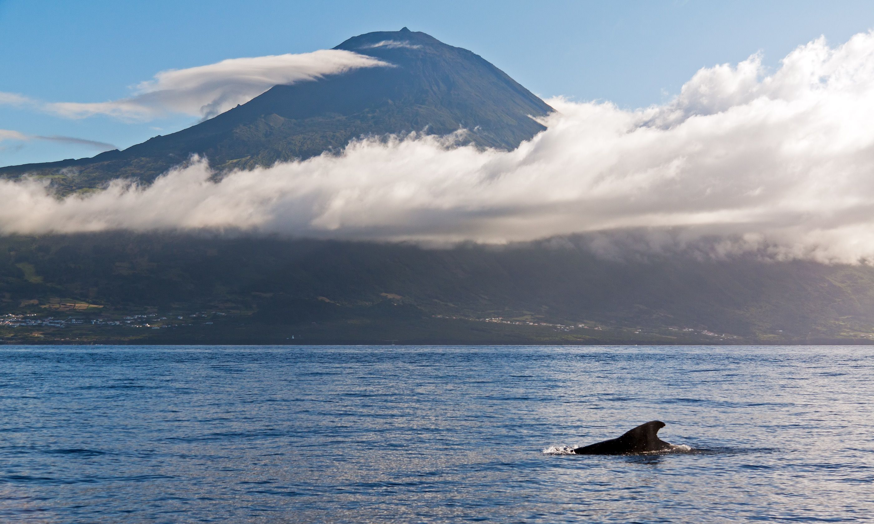 Whale frolicking in the Azores (Shutterstock.com)