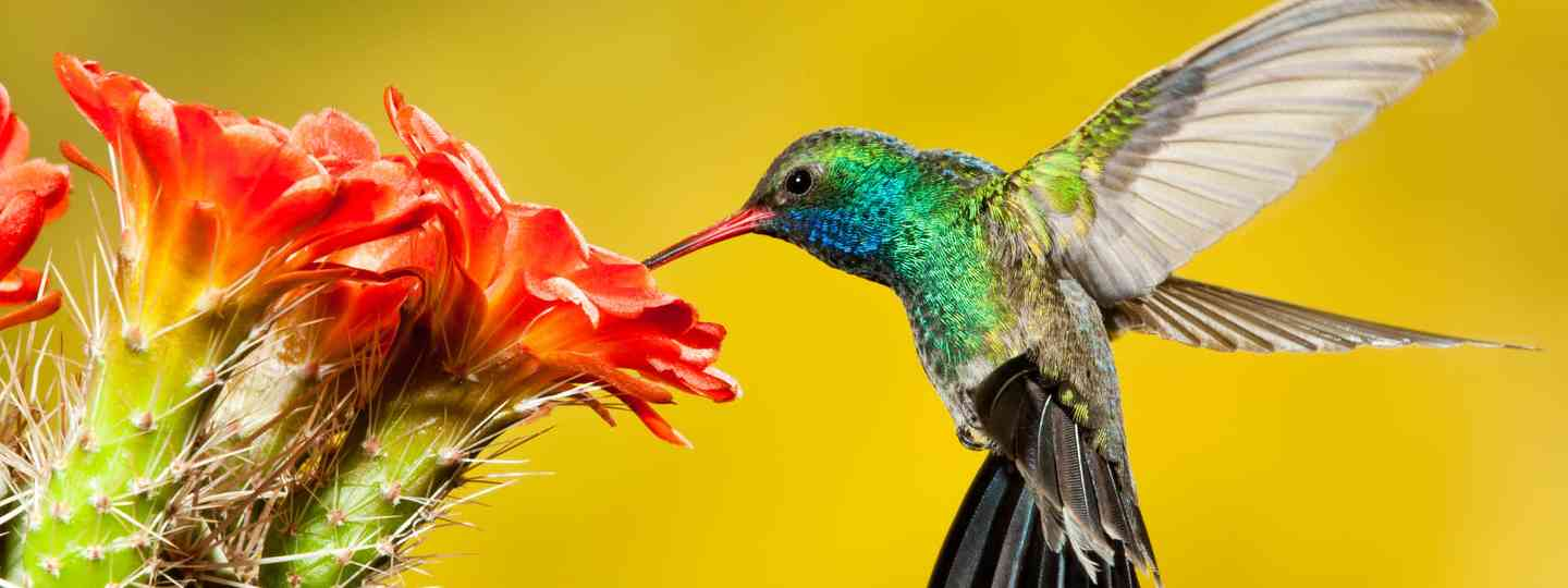 Hummingbird (Dreamstime)