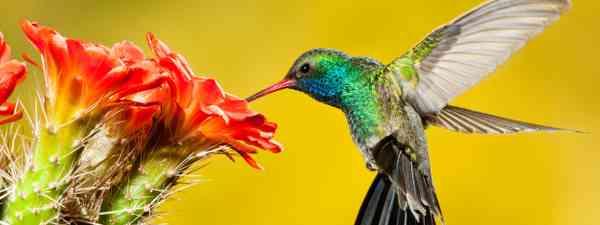 Hummingbird (Dreamstime)