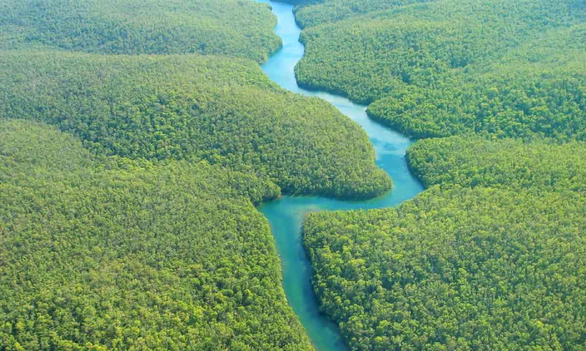 The Amazon (Shutterstock)