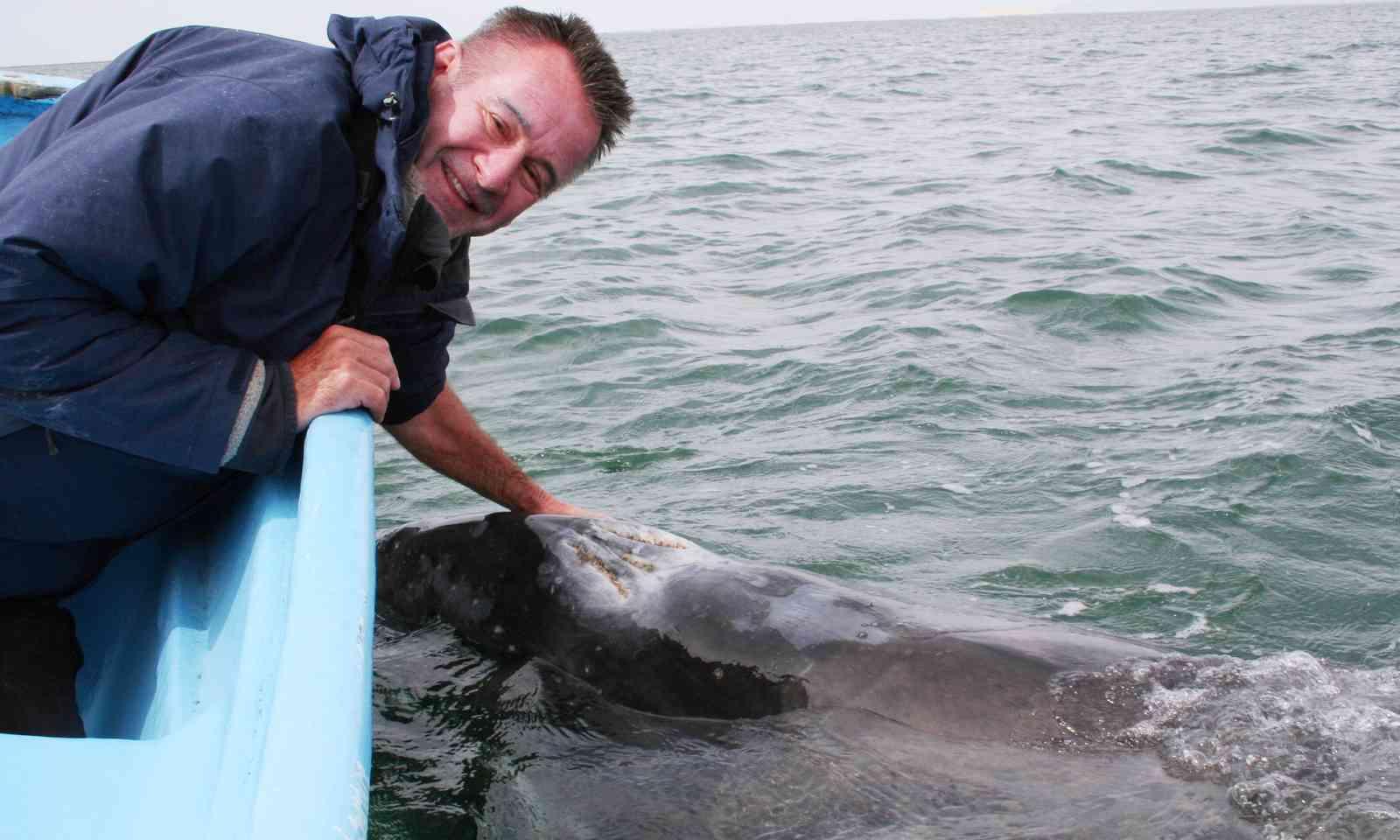 Nigel meeting a grey whale (Mike Garner)