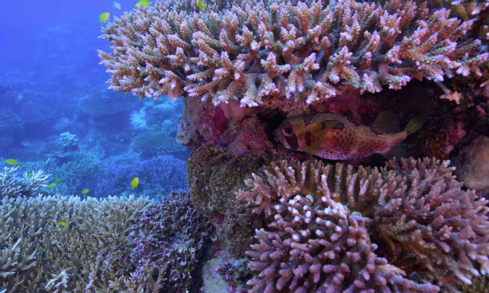 The evidence of coral bleaching (Netflix)