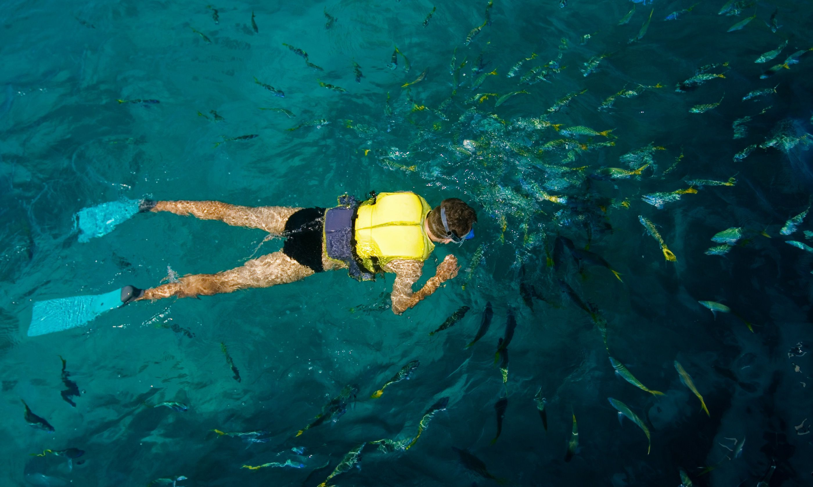 Snorkelling on the Great Barrier Reef (Shutterstock.com)