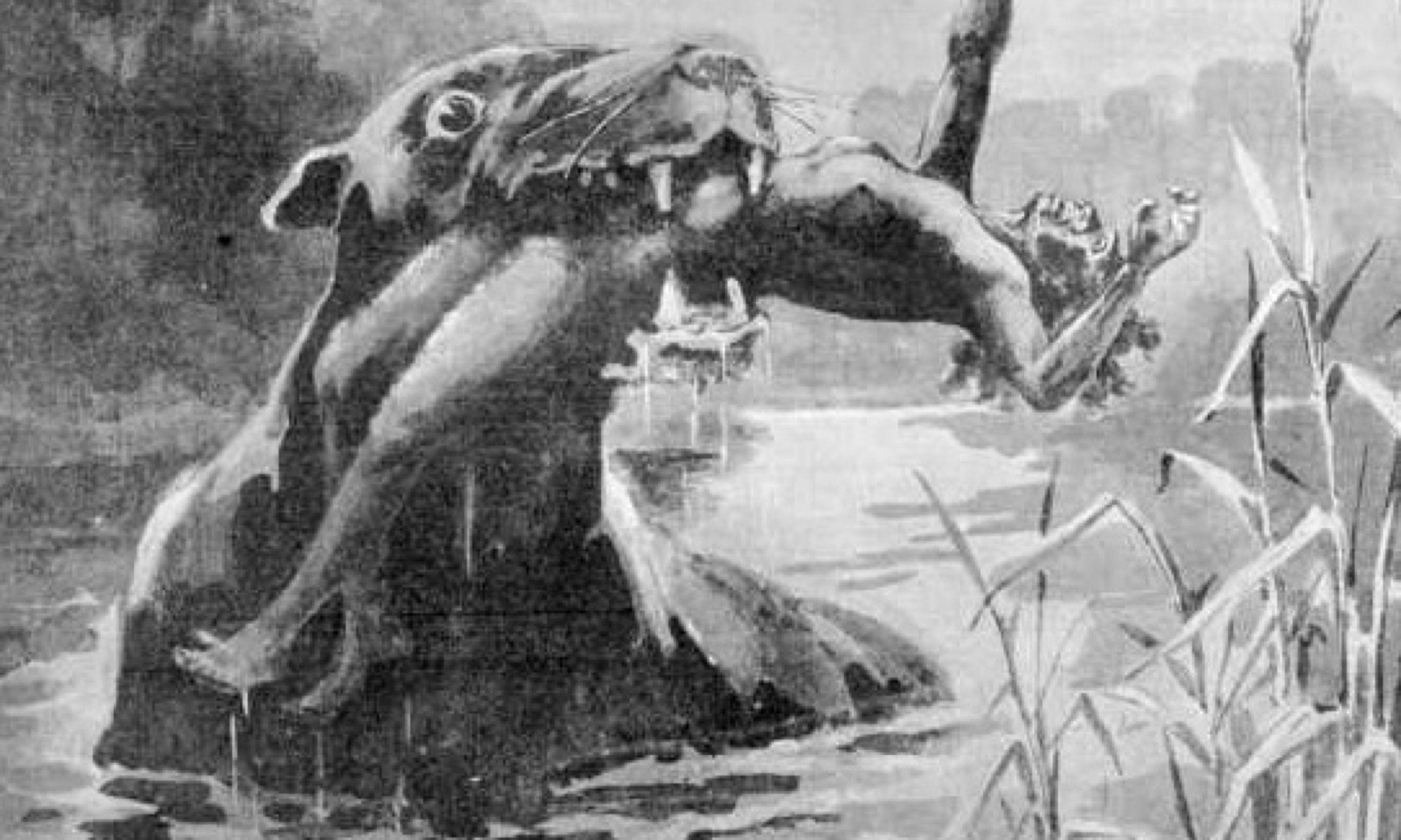 Illustration of Bunyip (J Macfarlane)