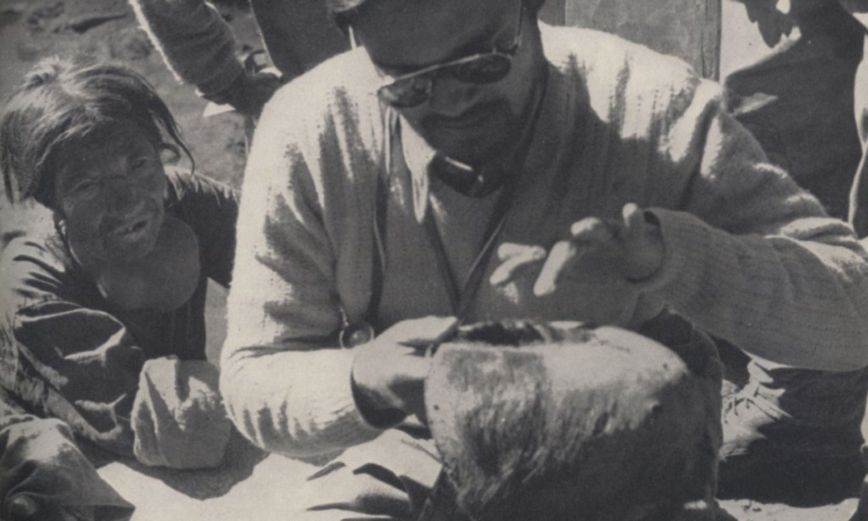 Doctor examining Yeti scalp (Creative Commons: Gowron)