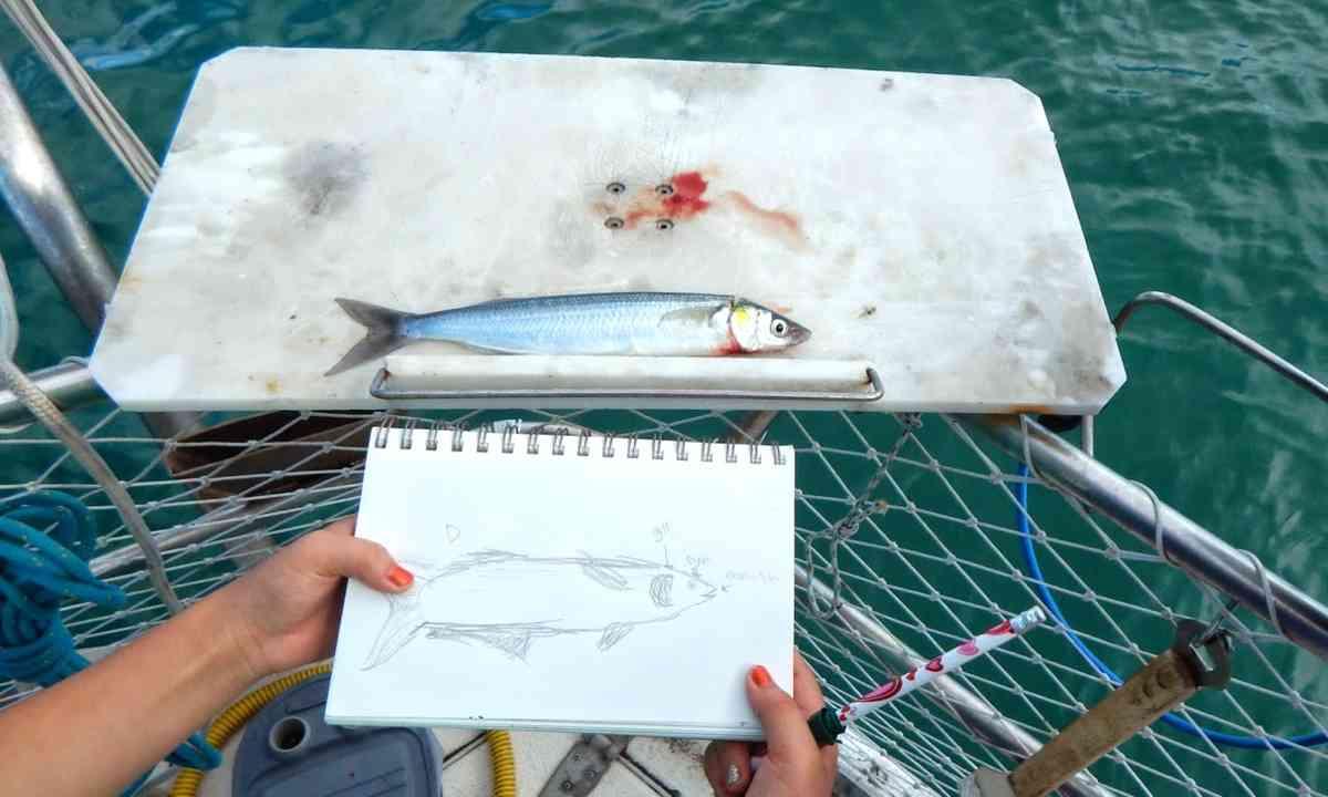Fish drawing (Aimee Nance)