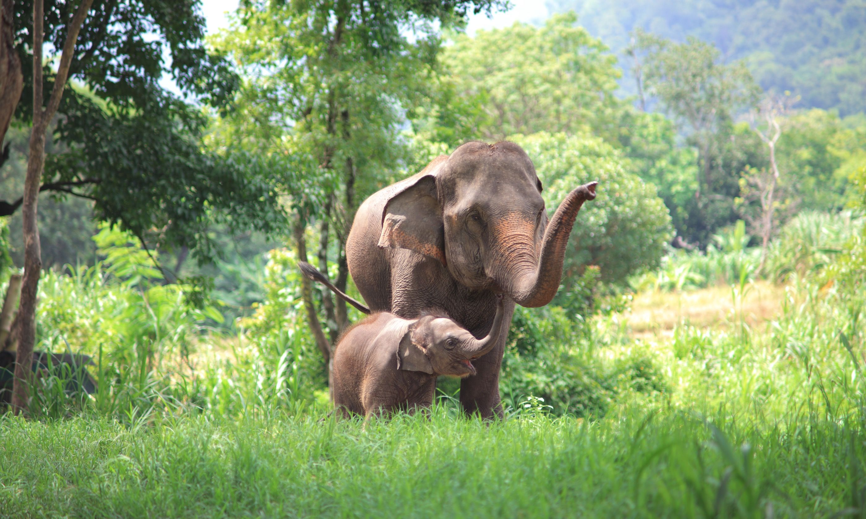 Mother and baby elephant in Thai forest (Shutterstock.com)