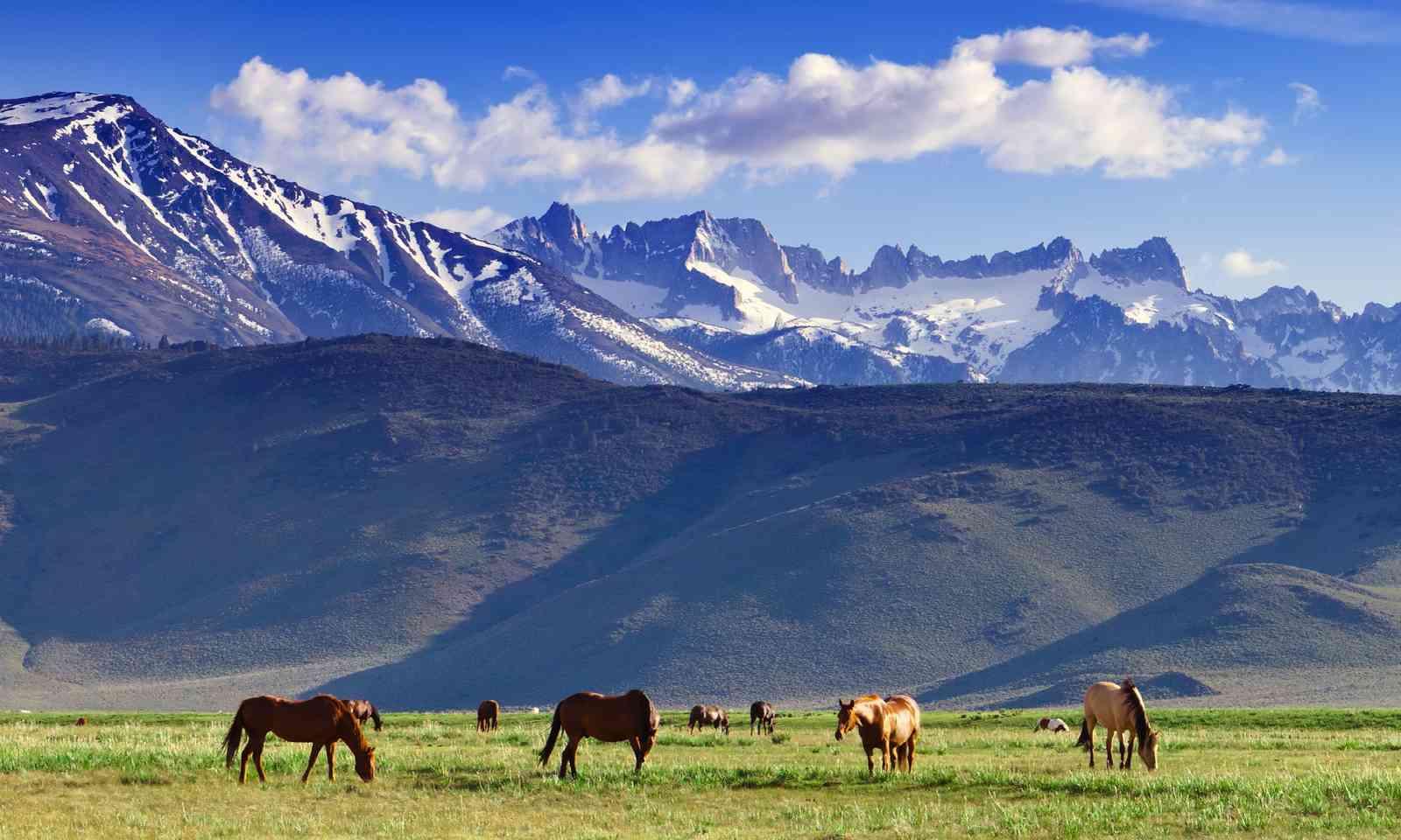 Wild horses near Bridgeport, California (Shutterstock.com)