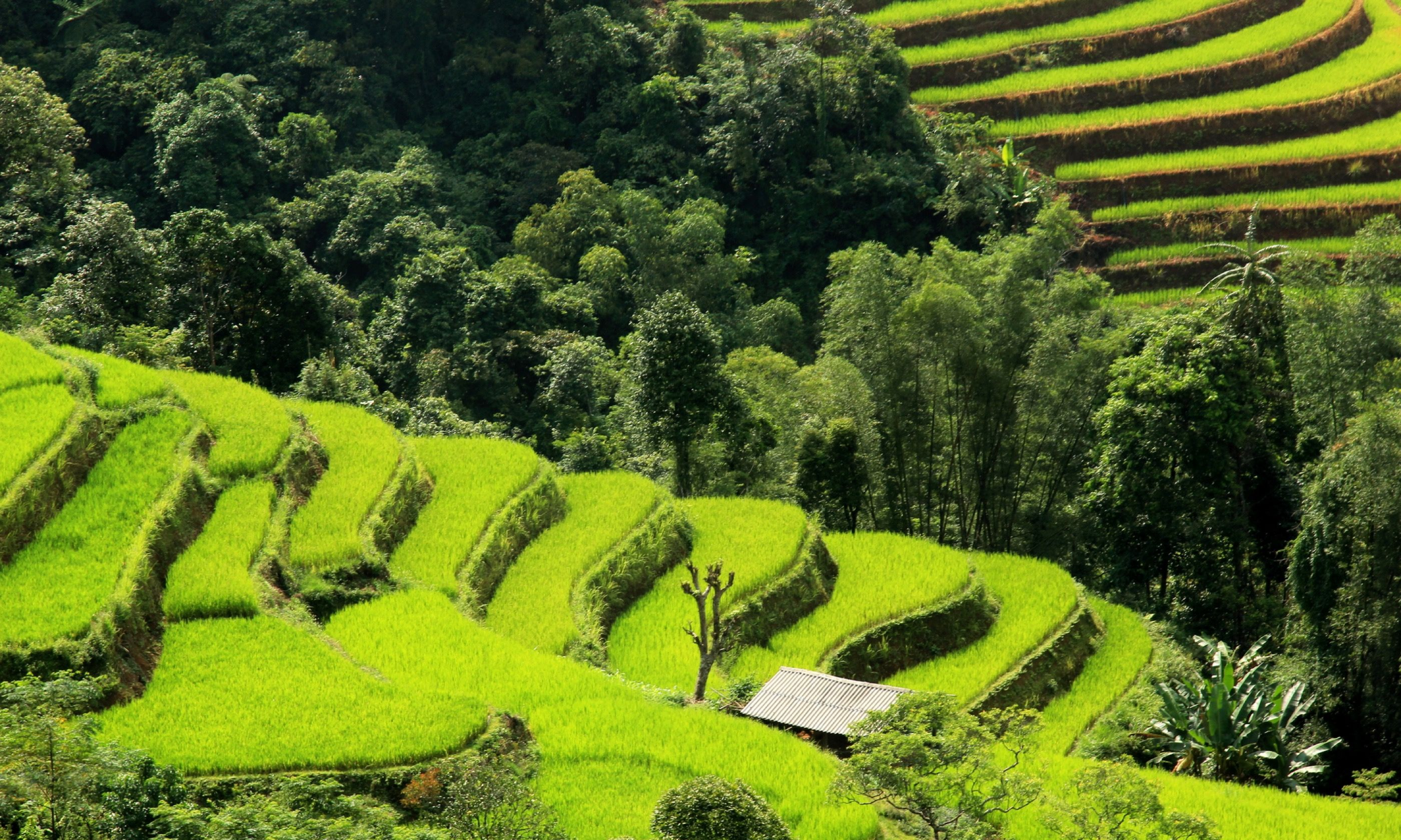 Hà Giang (Inside Vietnam)