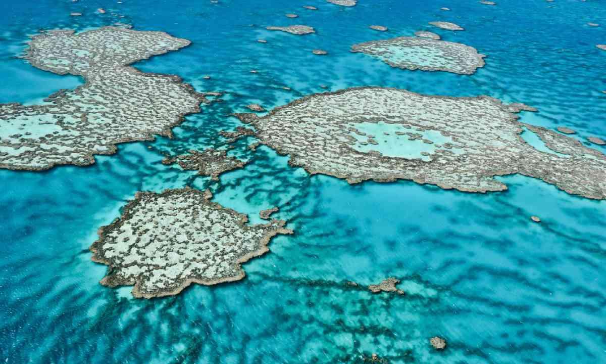 Great Barrier Reef (Shutterstock)